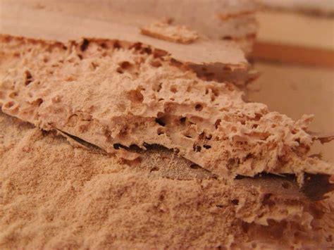 eliminare tarli dai mobili come eliminare i tarli trattamento anti tarlo