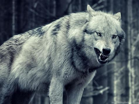 Wolf Wallpaper For Iphone 11 by Wolf Wallpaper Iphone 5 Animals Wolf Iphone 6 Plus