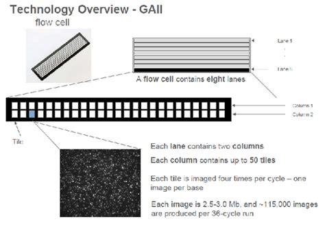 Illumina Flow Cell Illumina测序仪