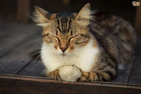 cats calming anxious tips cat pets4homes advice pet