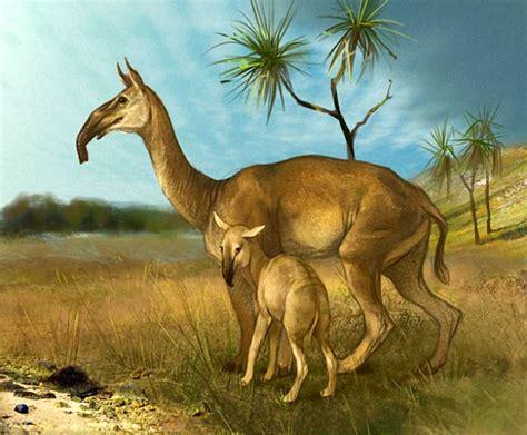 mammals south american macrauchenia ungulate horses prehistoric relatives olga animals extinct pleistocene ungulates america toed three even sci mamifero hoofed