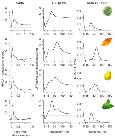 Responses to four example stimuli in monkey H. Example stimuli are...   Download Scientific Diagram