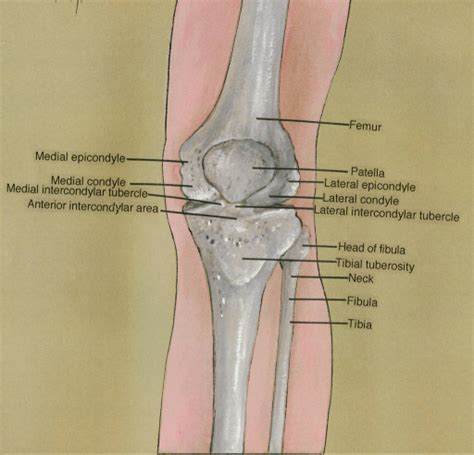 lateral epicondyle fracture adults