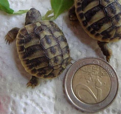 tortue terrestre a donner la ferme de doudou