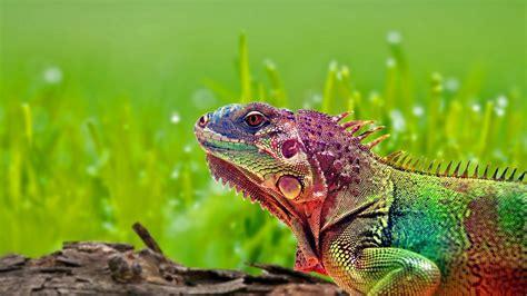 Hd Wallpapers 1366x768 Animals - 1366x768 hd desktop wallpapers animals wallpapersafari