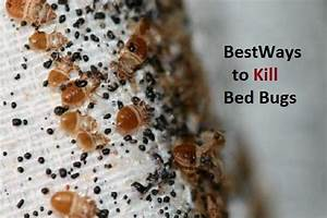 how to kill bed bugs naturally With can we see bed bugs