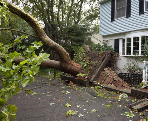home insurance claims  damage caused  trees