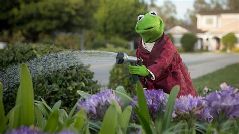 Kermit The Frog Flowers Sesame Street The Muppets