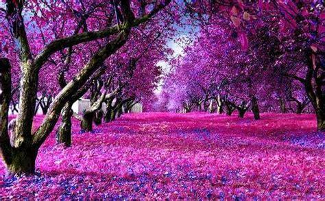 fushia purple trees landscape backdrop printing step