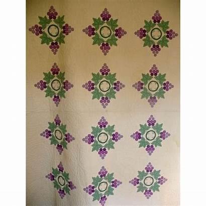 Applique Quilt Vines Grapes Gorgeous 1930 Quilts