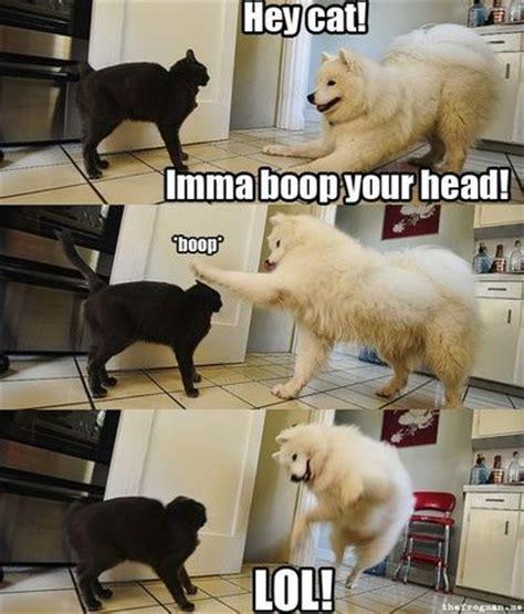 Boop Meme - hey cat imma boop you head bop funny dog meme puppies galore juxtapost