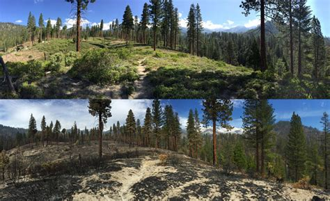 prescribed fires reduce tree death  drought