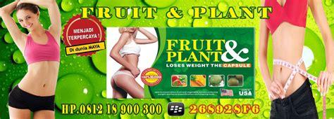 jual obat pelangsing fruit plant product pelangsing