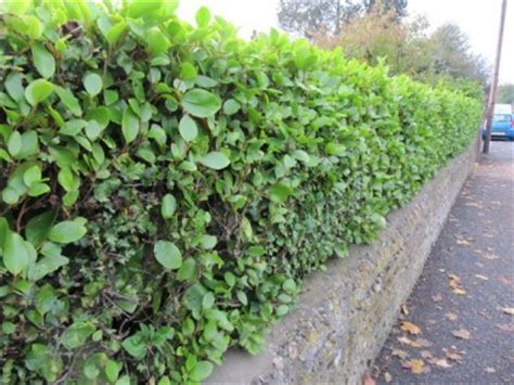 sound barrier shrubs top 28 sound barrier shrubs landscape noise barriers landscaping network noise barrier