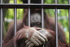 Combatting Cruelty In Asia's Zoos - Paw Mane Fin