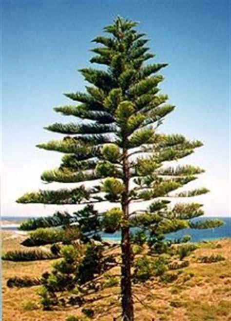 coastal trees tree nursery western australia mature