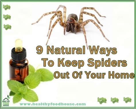 keep spiders out of house 9 ways to keep spiders out of your home 7624