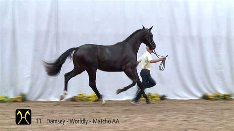 stallion damsey