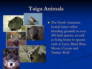 Life In The Taiga : parts of a caribou circuit diagram maker ~ Frokenaadalensverden.com Haus und Dekorationen