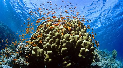 THE RECOVERY OF TUBBATAHA REEF | Stories | The Coral Triangle