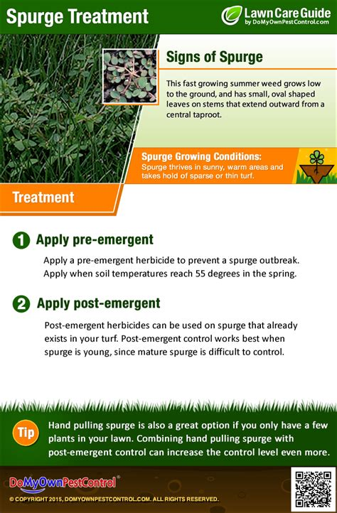 How To Kill & Get Rid of Spurge Weed - Treatment & Control