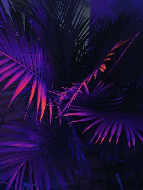 Black Neon Wallpaper Iphone by Related Image Aesthetic Purple Aesthetic Wallpaper