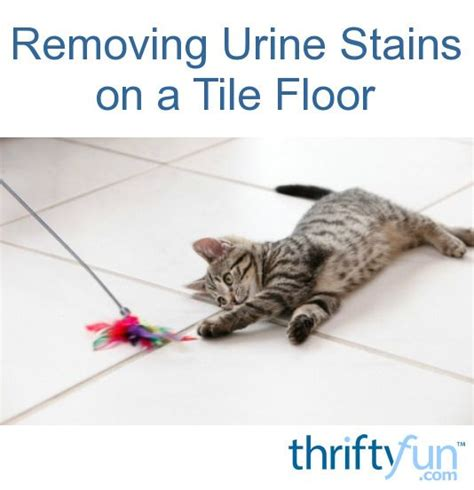 17 best ideas about urine stains on