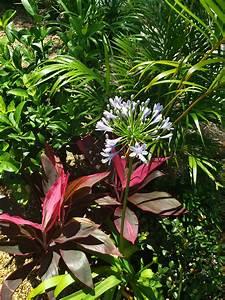 Non-native, Plants