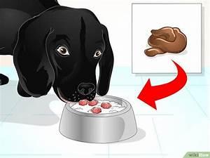 3 Modi per Solidificare le Feci del tuo Cane - wikiHow