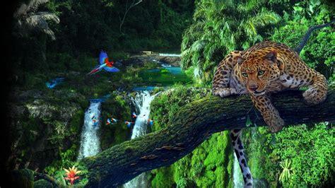 Rainforest Animals Wallpaper - rainforest wallpaper wallpaper studio 10 tens