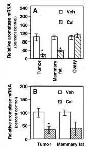 Testosteron androgen anabol Steroide Rezeptoren Muskulatur