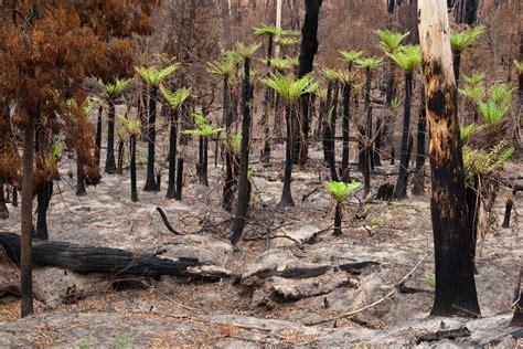 photo essay victorian bushfires    weeks