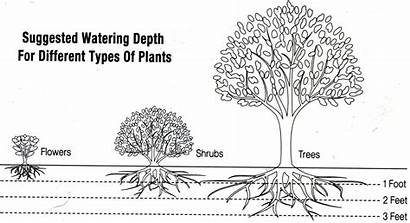 Roots Watering Deep Depth Plants Desert Water