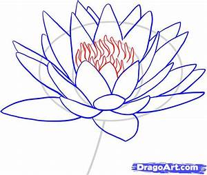 Step 7. How to Draw a Water Lily