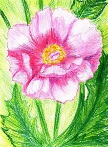 Blumen Bilder Gemalt : pfingstrose blume gemalt stockfoto colourbox ~ Orissabook.com Haus und Dekorationen