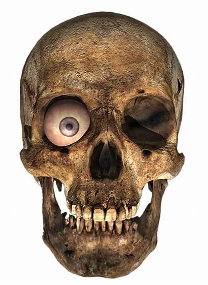 Skull Transparent Background Render Eye Deviantart Skulls