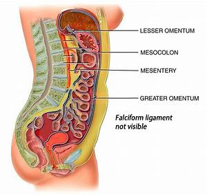 Test 5 Digestive System Pt 2