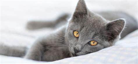 giardien bei katzen ansteckung symptome therapie