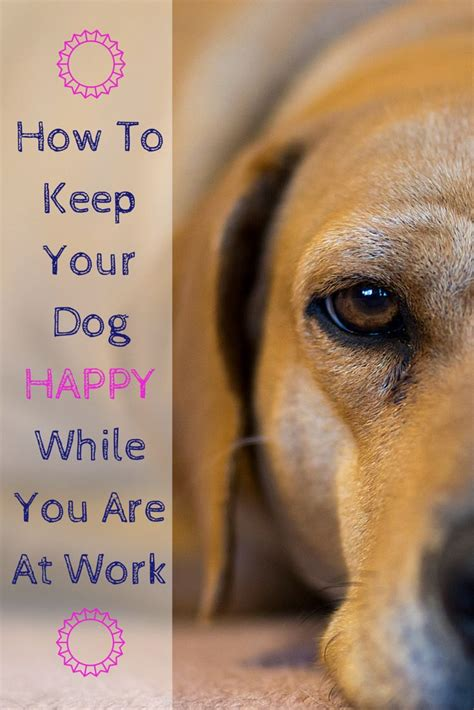 images  happy healthy pet care tips