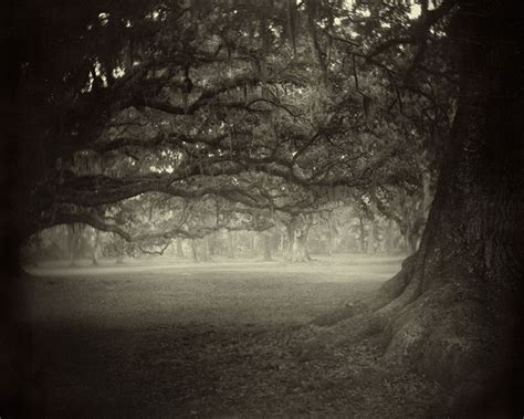 The Southern Photographer Sally Mann On Being A Southern