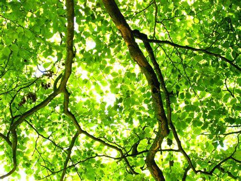 green tree light green tree by bruce denney open photo