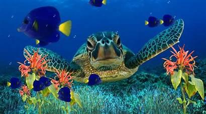 Aquarium Windows Desktop Animated Wallpapersafari