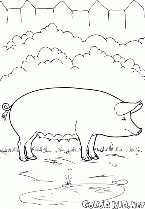 See relevant content for pornbay.top. Coloring page - Pig on the Farm