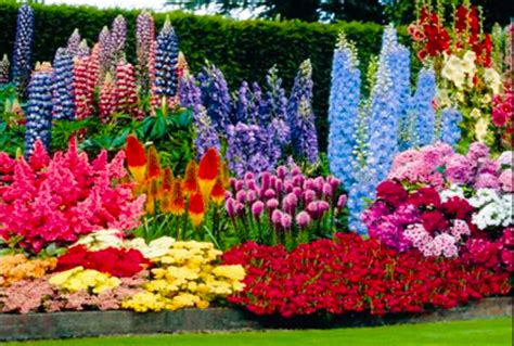 pin best perennial flowers for gardens on