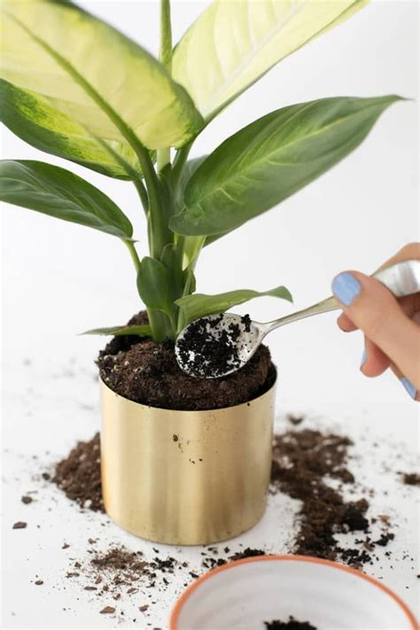Shop unique houseplants for sale from perfect plants. Here's Why You Should Give Your Plants Coffee | Fertilizer for plants, Plants, Uses for coffee ...