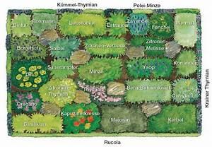 Gemüse Pflanzen Was Passt Zusammen : 17 beste idee n over pflanzplan op pinterest tuinbloemen ~ Lizthompson.info Haus und Dekorationen