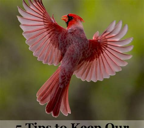 stop birds from hitting windows stop birds hitting windows 5 tips to keep our feather 8364