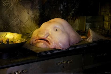 chambre moche le blobfish l le plus laid au monde le