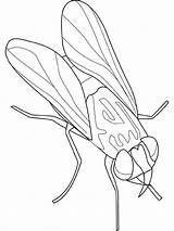 Fly Coloring Insect Animal Kingdom Disease Bring Sheet Sky Daydreaming Coloringsky sketch template