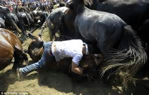 horses ground wild festival spanish wrestle horse shearing dangerous trampled fighters being during herded trimmed herd galicia mountains were down